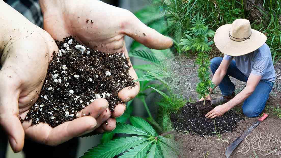 Existe aun gran variedad de suelos para Cannabis.