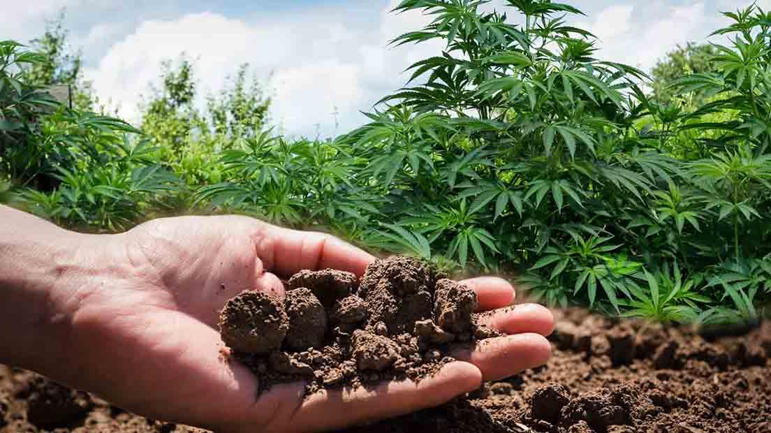 Es importante seleccionar un buen sustrato para marihuana