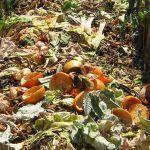 compost casero para marihuana