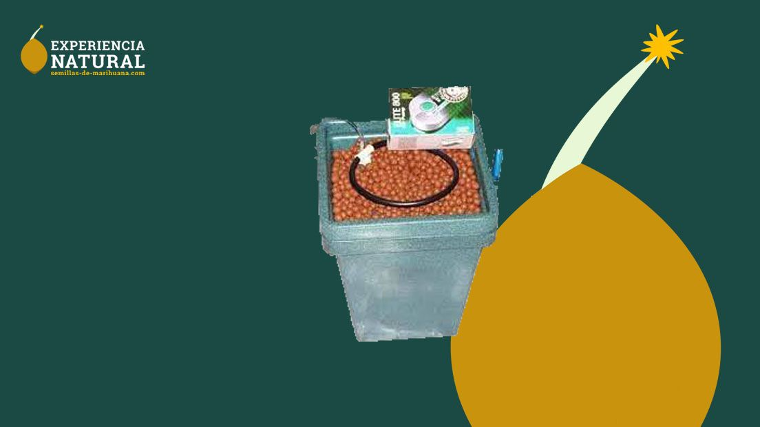 kits de cultivo hidropónico