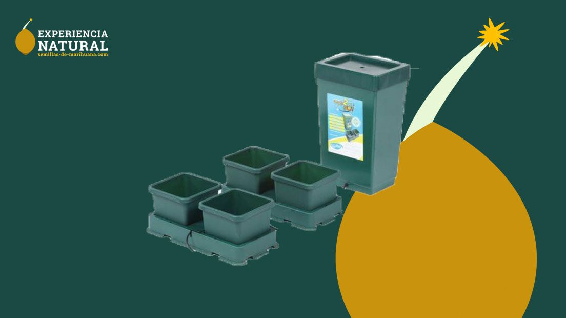 kits de cultivo hidropónicos
