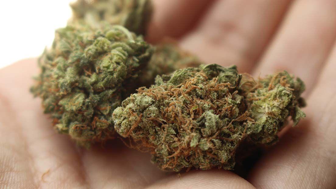 propiedades organolépticas de Cannabis