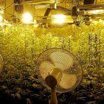 Ventilación de la marihuana