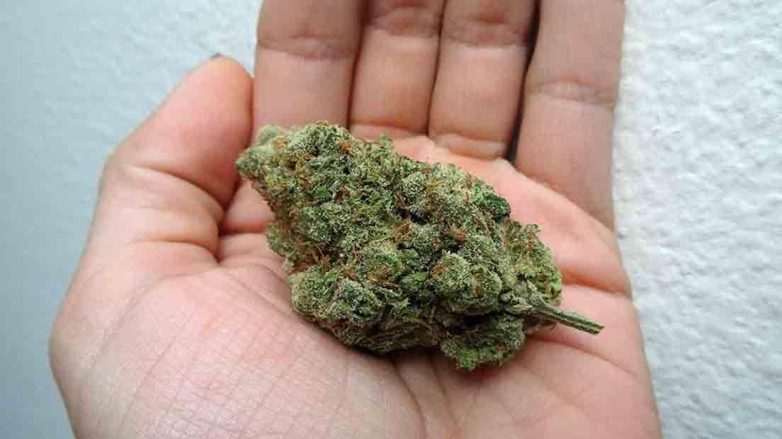 Manicurar marihuana