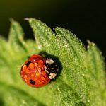 Insectos beneficiosos para la marihuana