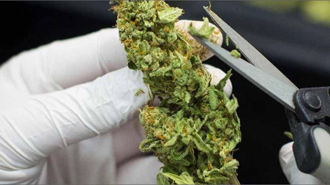 Manicurar en seco o en húmedo son las dos formas principales de manicurado de marihuana