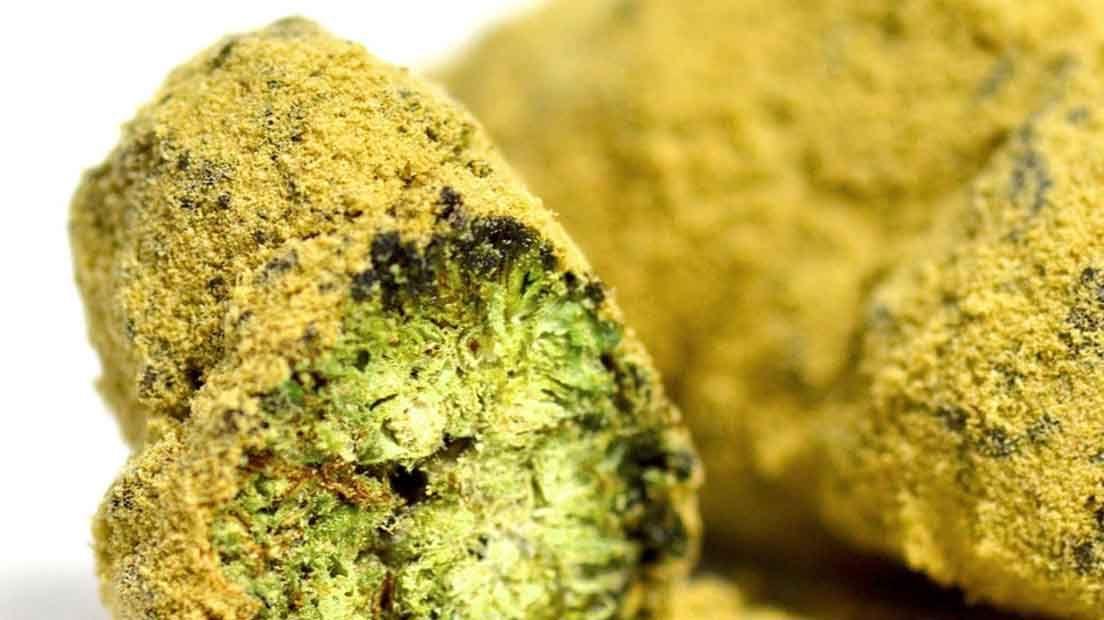 Para hacer moonrocks de calidad es preciso contar con buenos cogollos reisnoso, aceite de Cannabis y polen de marihuana