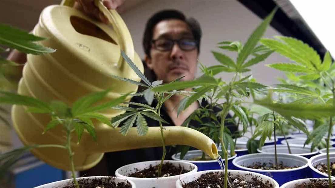 Para regar las plantas jóvenes, lo mejor es hacerlo con precaución.