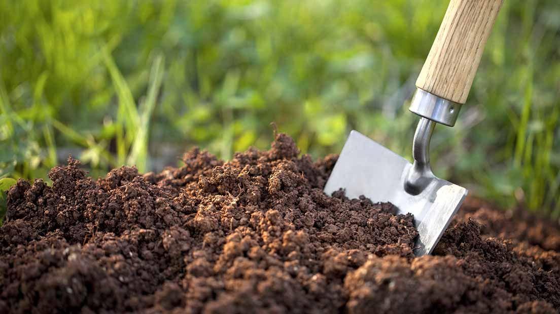 Para hacer suelo nutritivo para la marihuana necesitas sustrato y restos orgánicos.