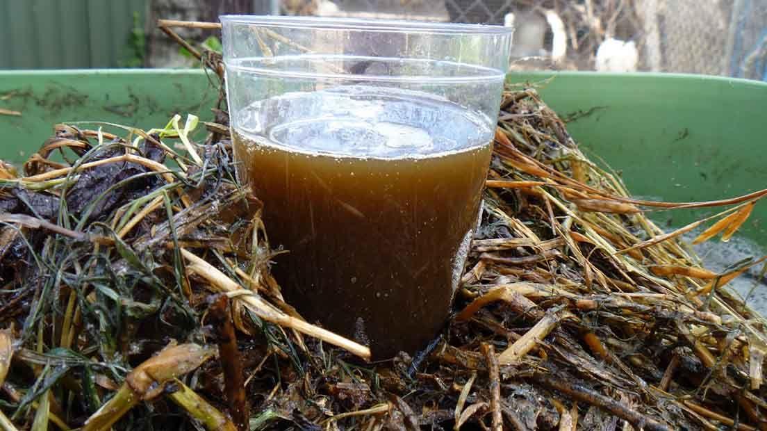 Para hacer té de compostaje precisas de unos cimientos buenos, un buen compost casero.