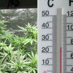 La temperatura del cultivo de marihuana puede controlarse con un termómetro.