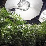 cultivar marihuana en interior requiere de unos cuantos elementos para recrear las condiciones de la marihuana en la naturaleza