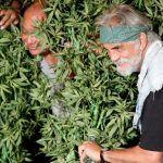 Las películas sobre la marihuana es interesante y nos enseña más sobre esta planta