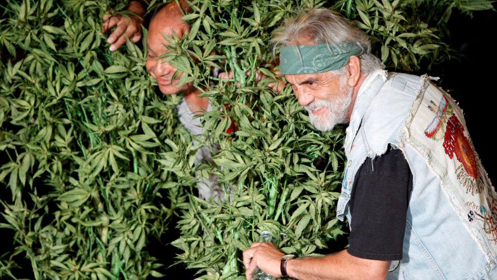 películas sobre la marihuana como Cheech and Chong