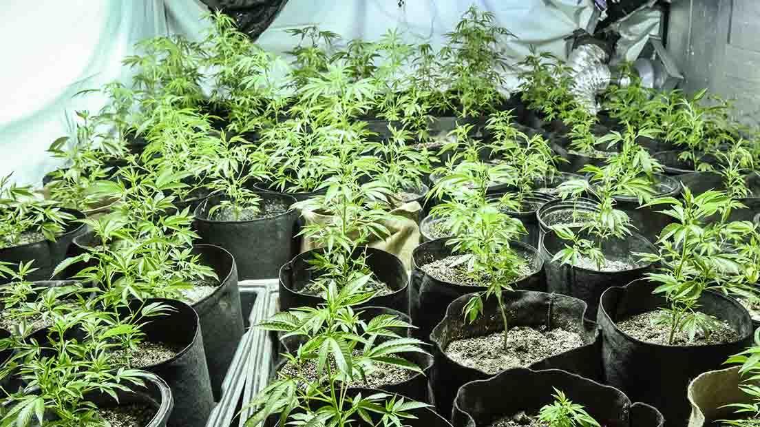 Tiestos para marihuana de tela