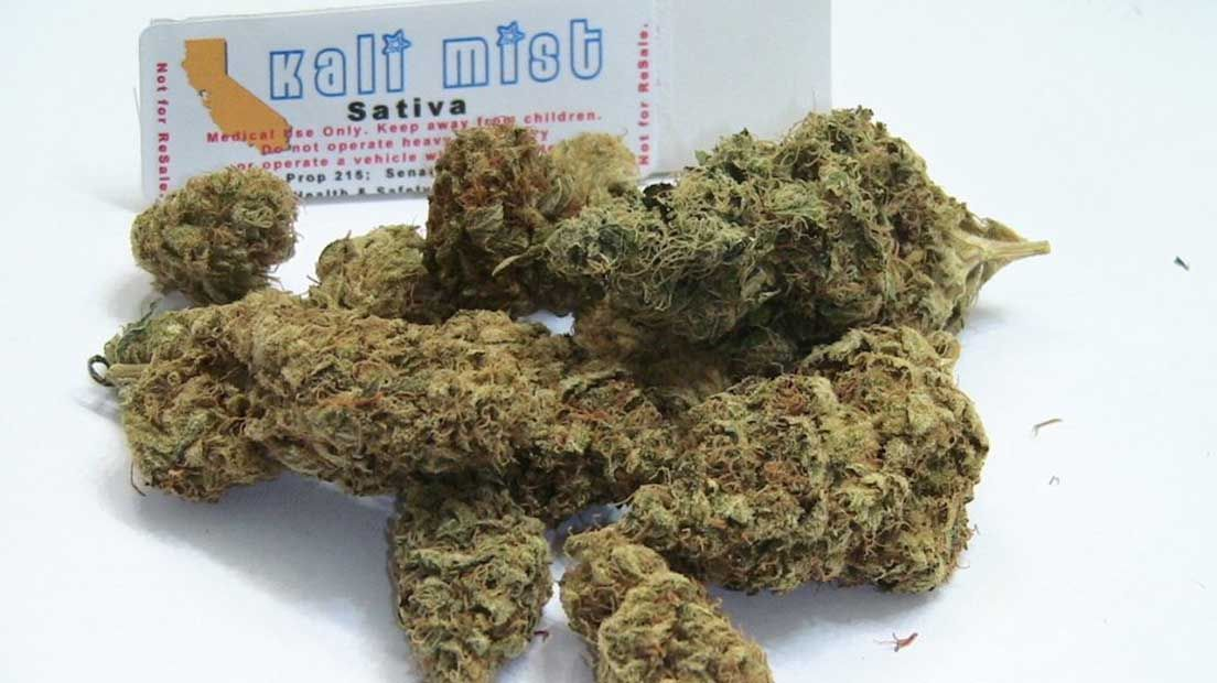 La marihuana sativa es conocida por las floraciones largas.