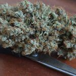 Triturar marihuana sin grinder es posible con un molinillo de café.