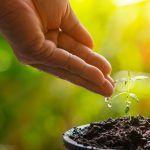 El riego es esencial para el crecimiento de la marihuana