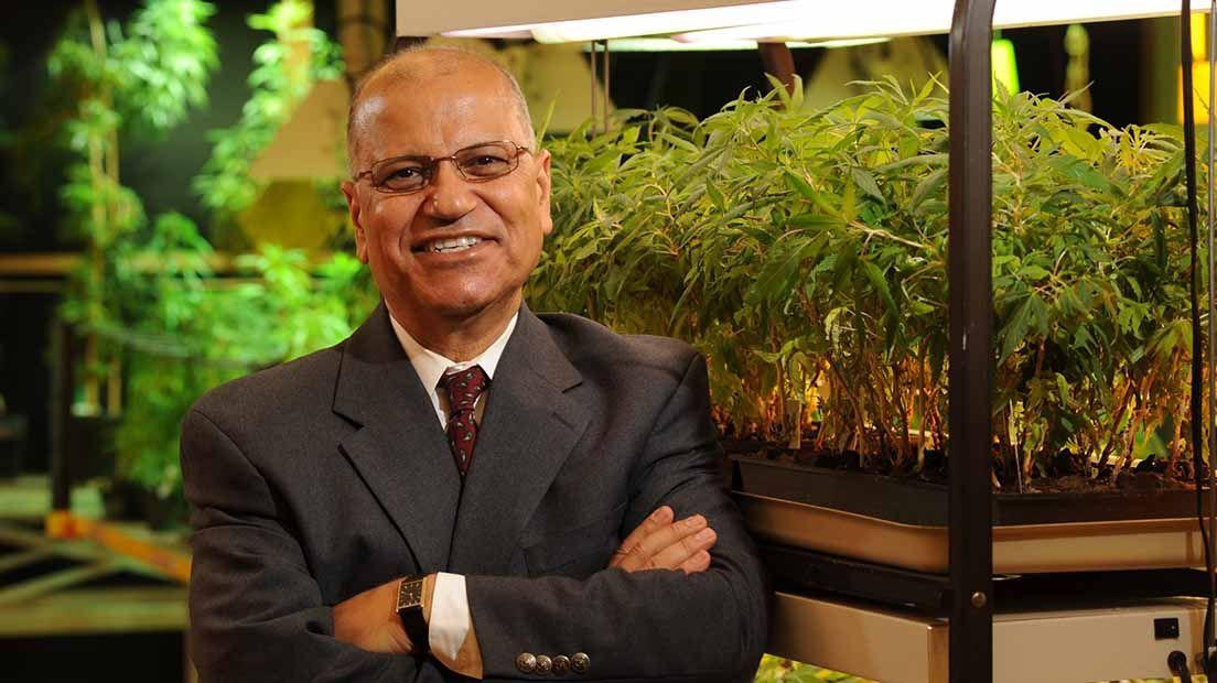 Descubre los mejores cultivadores de marihuana
