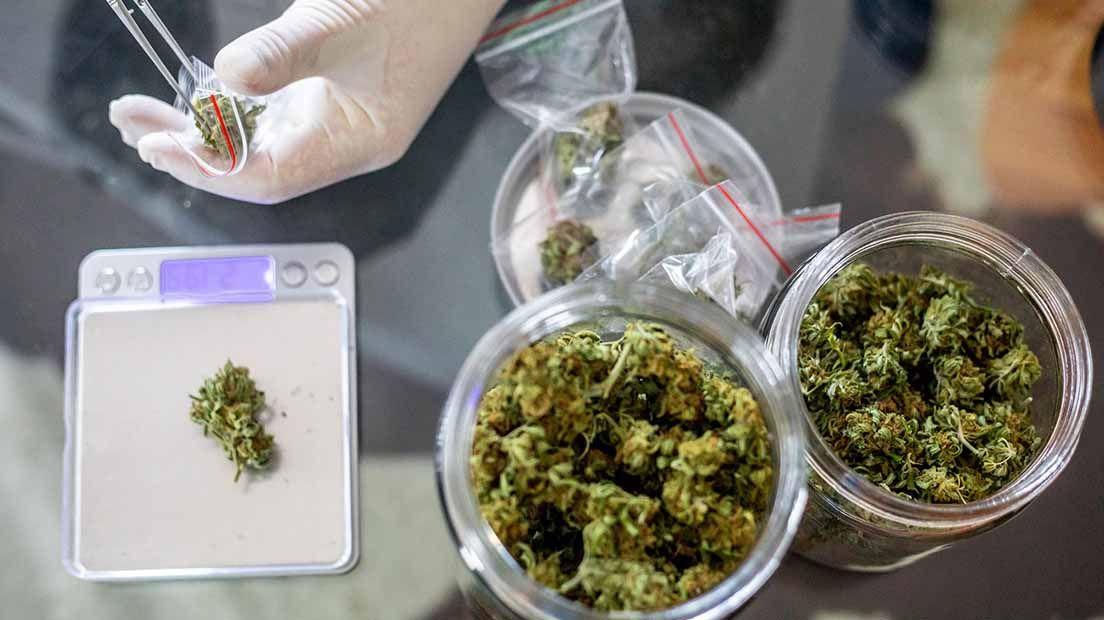 la marihuana heirloom también se conoce como cepas puras