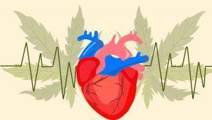 La ciencia ha hecho muchos estudios sobre el papel de la marihuana en los problemas cardiovasculares.