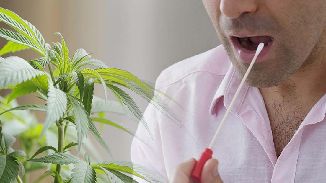 La duración del THC en saliva varía en funciónd e tu peso, sexo y cantidad fumada.