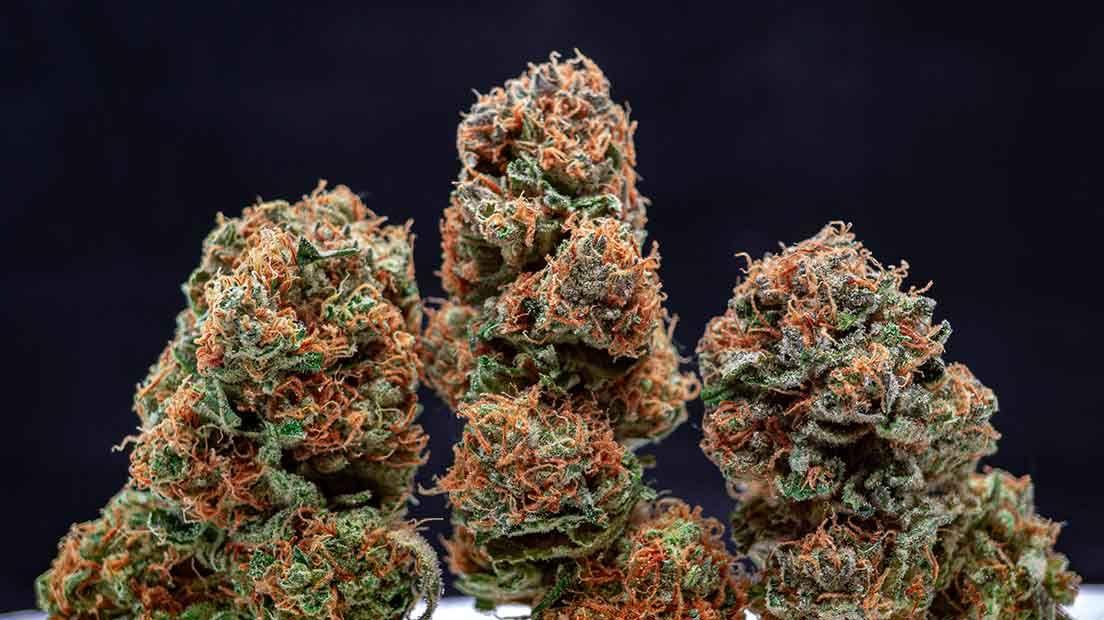 Una de la mejor marihuana Índica de 2020 es la Orange Sherbet por su buen rendimiento y aroma.