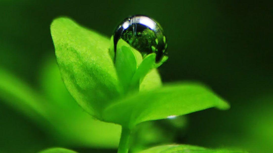 Gracias a la ósmosis la planta puede permanecer erguida.