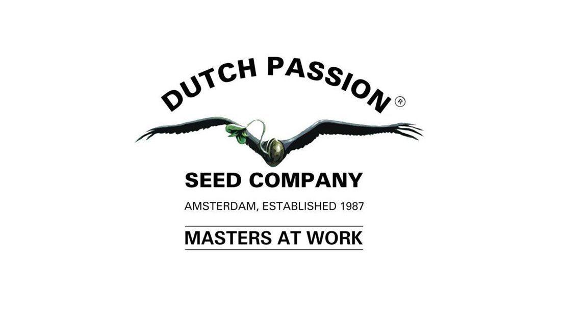 Los mejores bancos de semillas de marihuana 2020: Dutch Passion