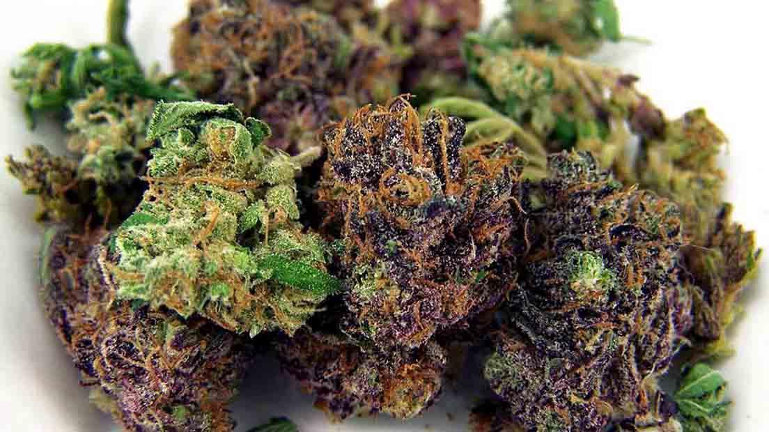 podrás disfrutas diferentes variedades de Cannabis si las cultivas juntas.