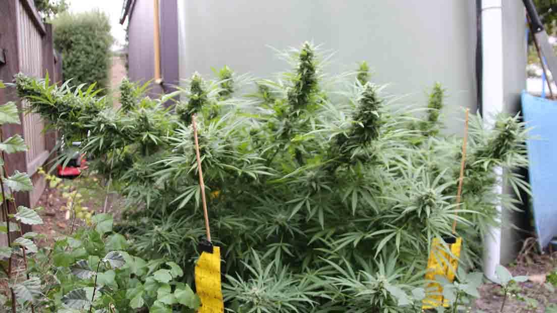 El Mejor Lugar para Cultivar Cannabis tiene que ser discreto