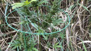 Decidir cuál es el Mejor Lugar para Cultivar Marihuana depende de tu jardín.