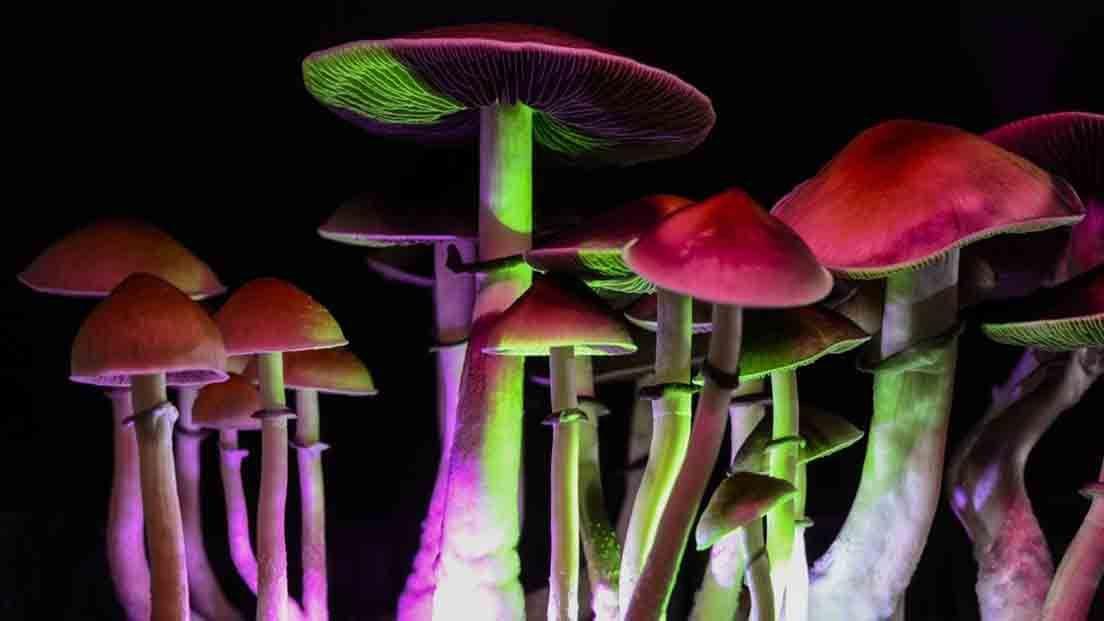 El uso de marihuana con psilocibina se debe hacer de forma responsable.