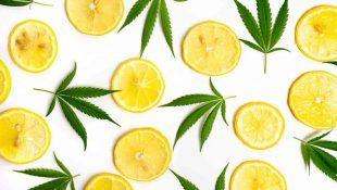 El limoneno tiene propiedades cítricas.