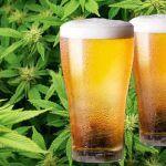Descubre todos los tipos de maridaje de marihuana y cerveza