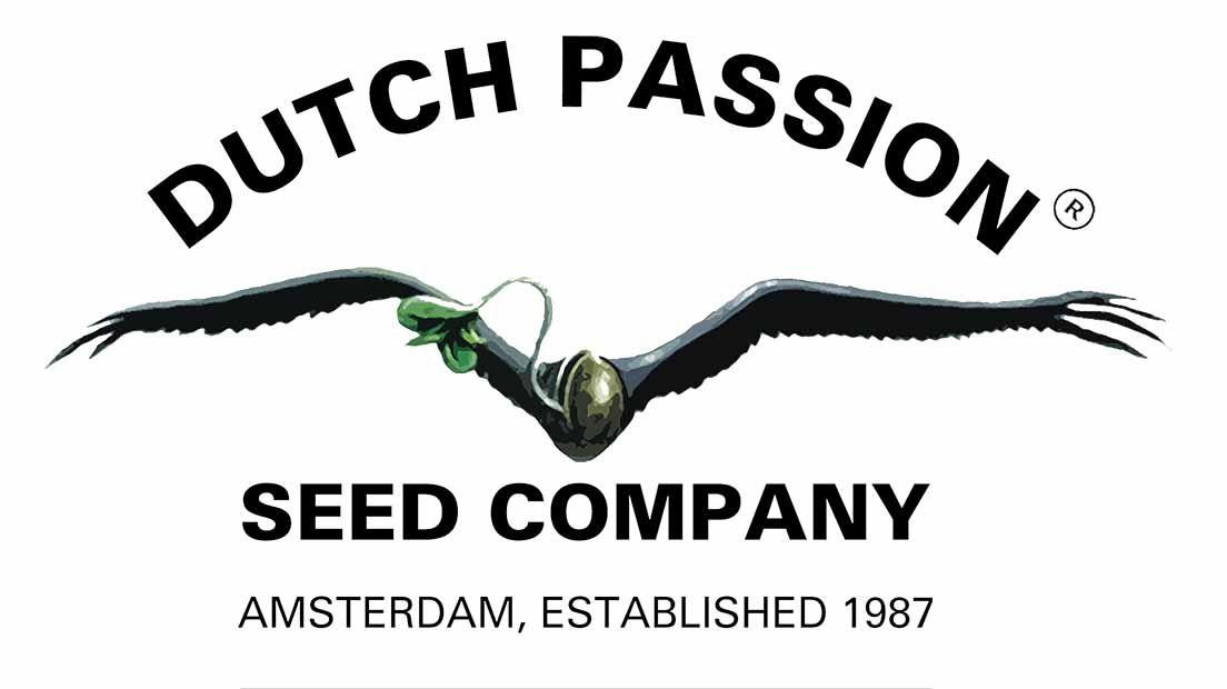 Dutch Passion es uno de los mejores bancos de semillas holandeses.
