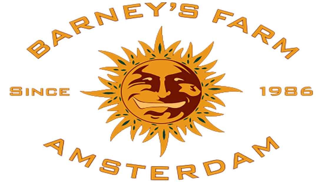 Barney's Farm es uno de los mejores bancos de semillas de Holanda con genéticas únicas.