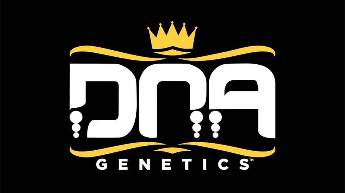 DNA Genetics es uno de los mejores bancos de semillas de Holanda con genéticas americanas.