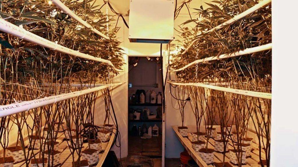 ¿Cómo Hacer una Solución Nutritiva para Cultivos Hidropónicos?