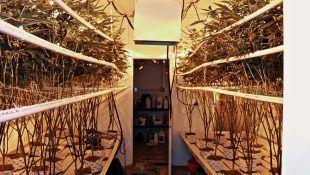 La solución nutritiva se encarga de alimentar a las plantas en hidropónico.