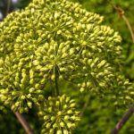 Los terpenos son compuestos aromáticos presentes en las plantas