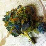 cogollo de la marihuana