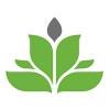 Female Seeds | Autoflowering Marijuana Seeds