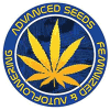 Advanced Seeds autoflowering | Buy Marijuana Seeds