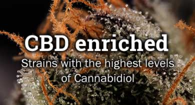 CBD enriched