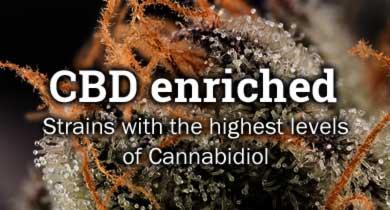 CBD enriched