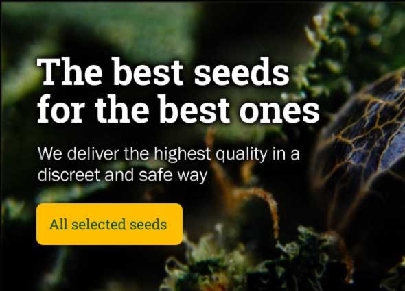 Best cannabis seeds