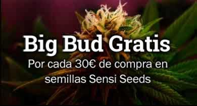 Seeds deal 2