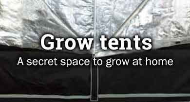 Cannabis grow tents
