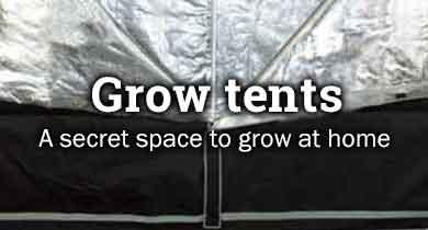 Cannabis grow tents
